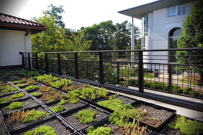 On the green roof at the dormitories known as the Complex, various produce are thriving.