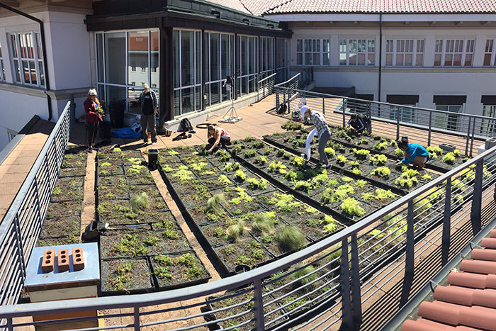 Several students work on the green roof on top of the Math and Science Center.
