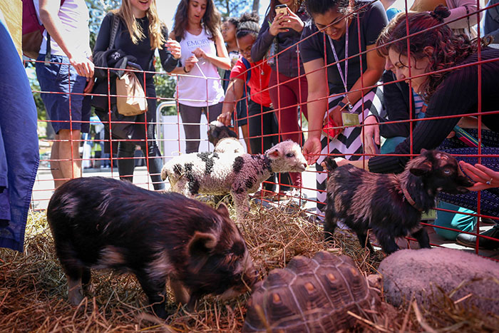 Small pigs, sheep, goats, and turtles are part of Wednesday's petting zoo