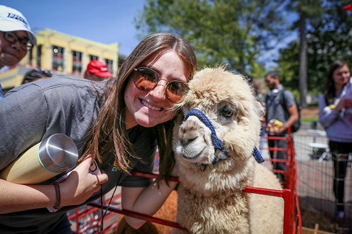 An Emory student donning sunglasses takes a photo with a llama at the petting zoo