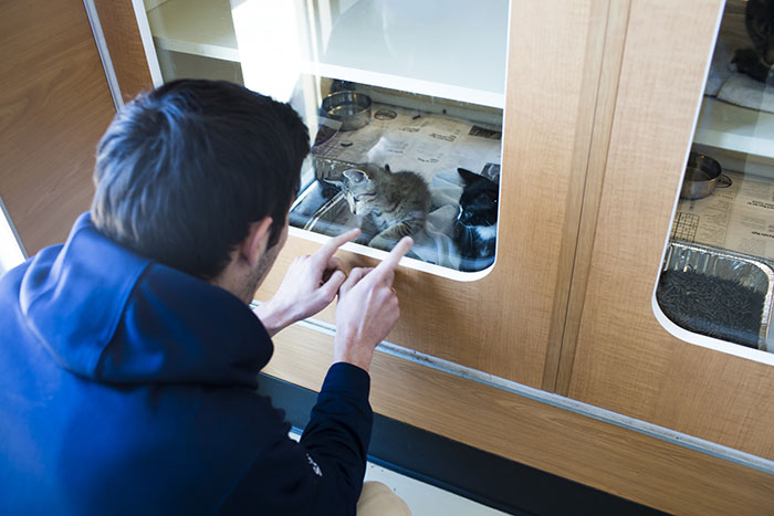 A student plays with two kittens at Lifeline Animal Project