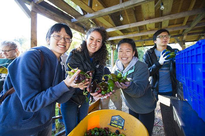 Students pick produce at Truly Living Well Center