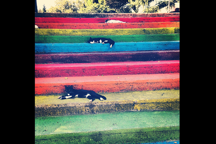 "Third place: ""Cats on cats on cats...on protest steps,"" Istanbul, Turkey. Photo by Kathryn Laura Cyr."